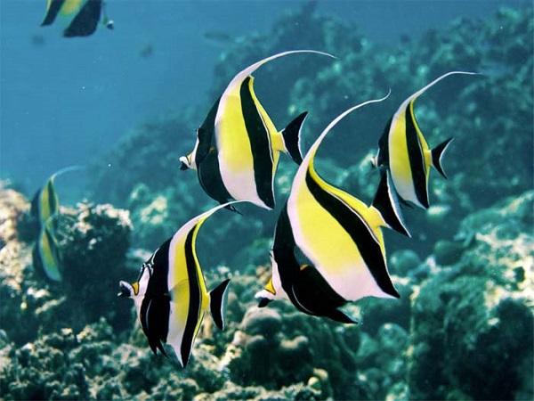 Mơ thấy cá đánh con gì dễ trúng?