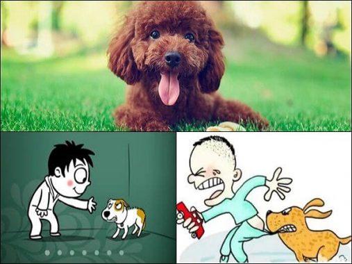 Mơ thấy chó cắn đánh con gì hôm nay chuẩn nhất?