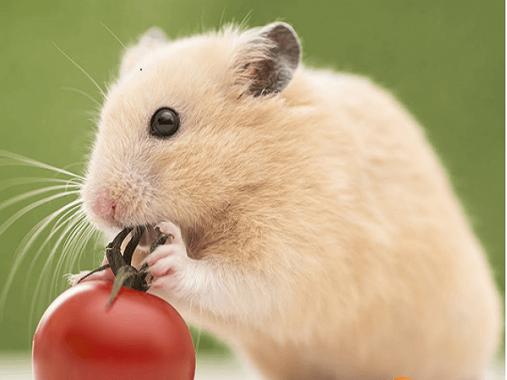 Mơ thấy chuột đánh lô đề con gì? Giải mã giấc mơ thấy chuột