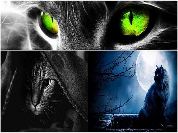 Mơ thấy mèo đen là điềm báo gì?