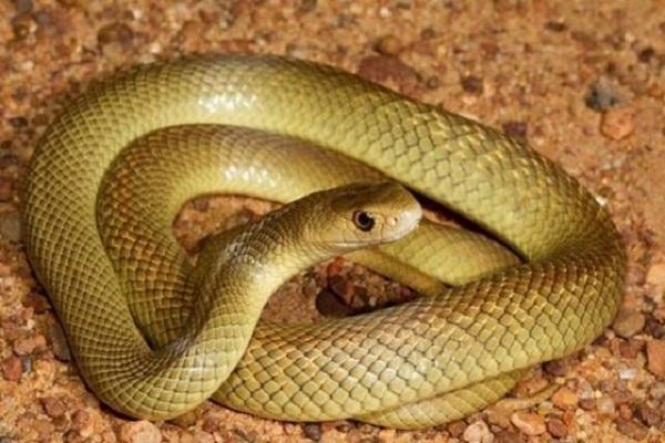 Giải mã bí ẩn khi nằm mơ thấy rắn