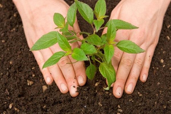 Ý nghĩa mơ thấy trồng cây trong phong thủy