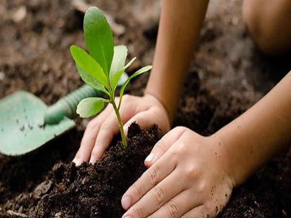 Mơ thấy trồng cây mang lại điềm báo gì?